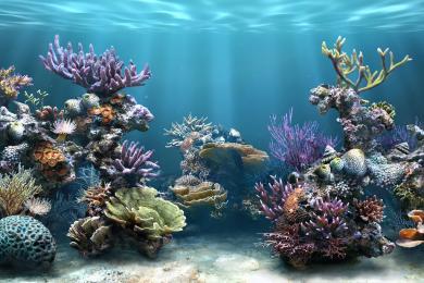 Screenshot Sim Aquarium Salvapantallas