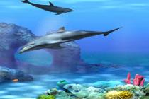 Descargar Living 3D Dolphins ScreenSaver 2.107