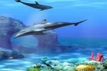 Descargar Living 3D Dolphins ScreenSaver 2.107