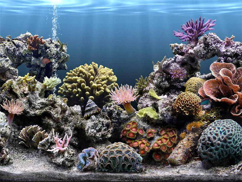 Serenescreen marine aquarium 2.6