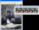 Descargar Tint Photo Editor