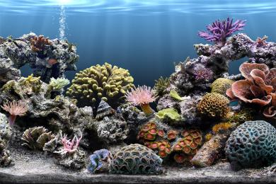 Screenshot Sim Aquarium Screensaver