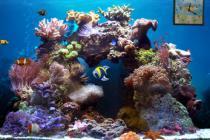 Beautiful Reef Animated 3D